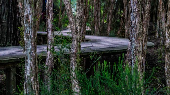 Picture of a boardwalk in a forest