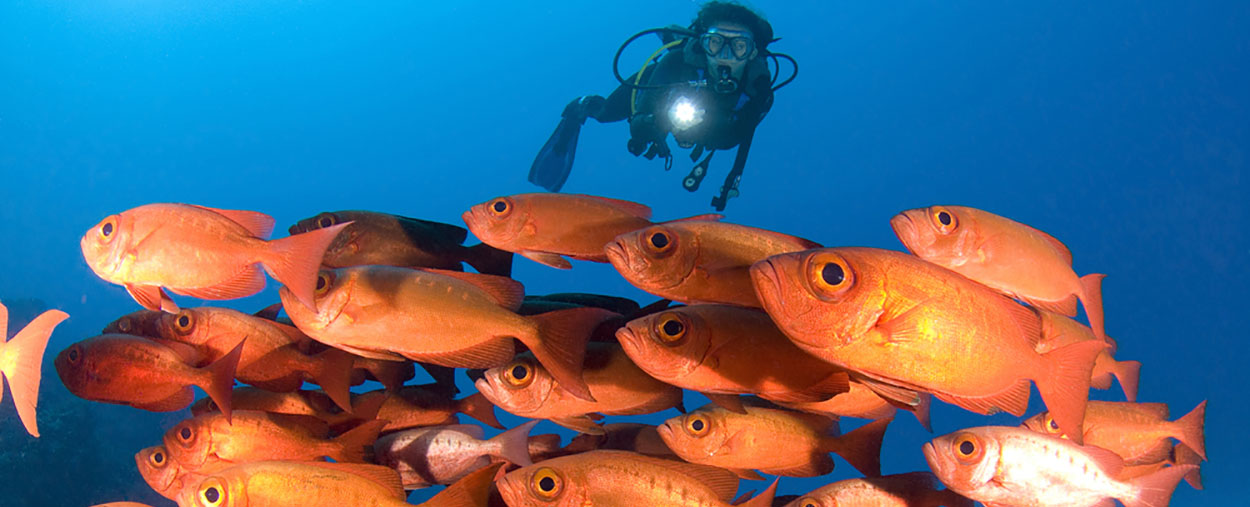 fish and diver stockphoto